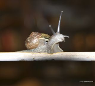 Snail cropped