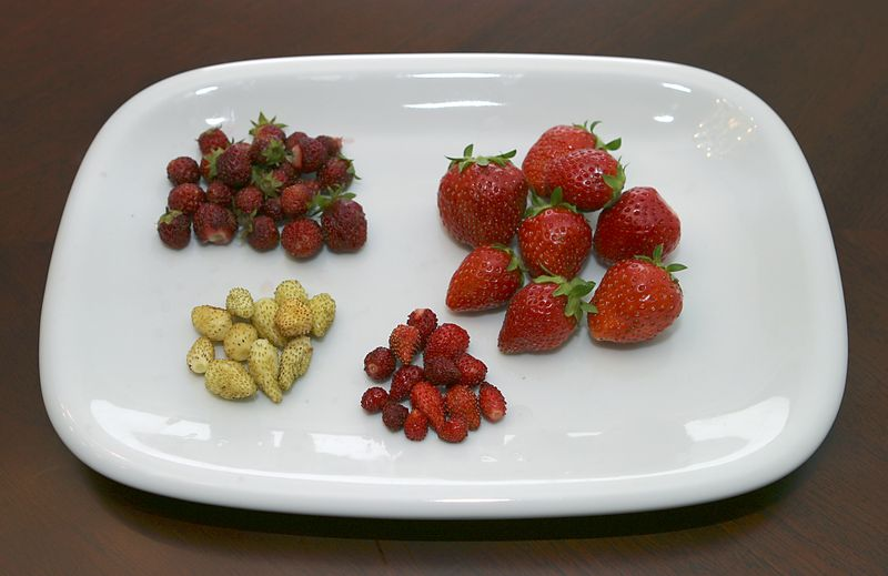 Different strawberries