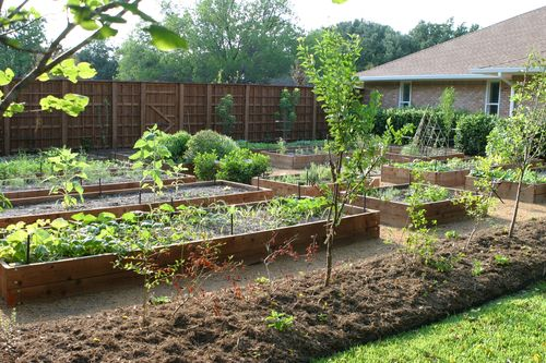 Dallas Fruit And Vegetable Grower How To Advice