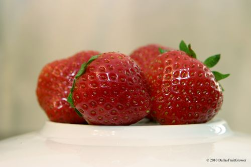 Seascape Strawberries 2010