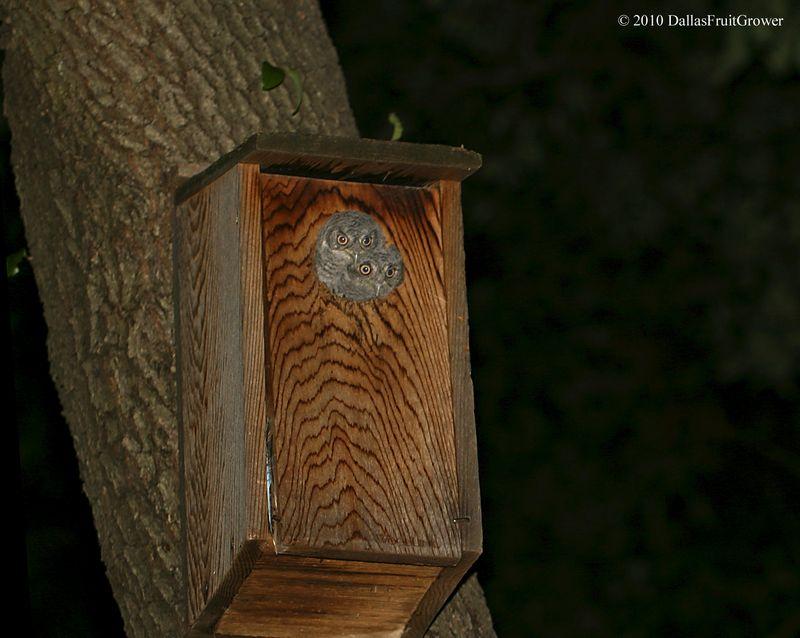 2 Owlets