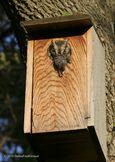 CLOSE-UP of owl with prey copy