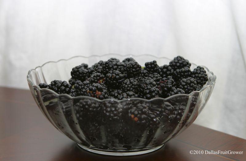 Blackberry bowl