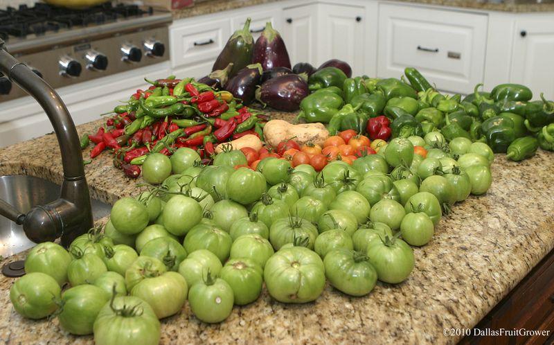 Fall harvest '10 x2