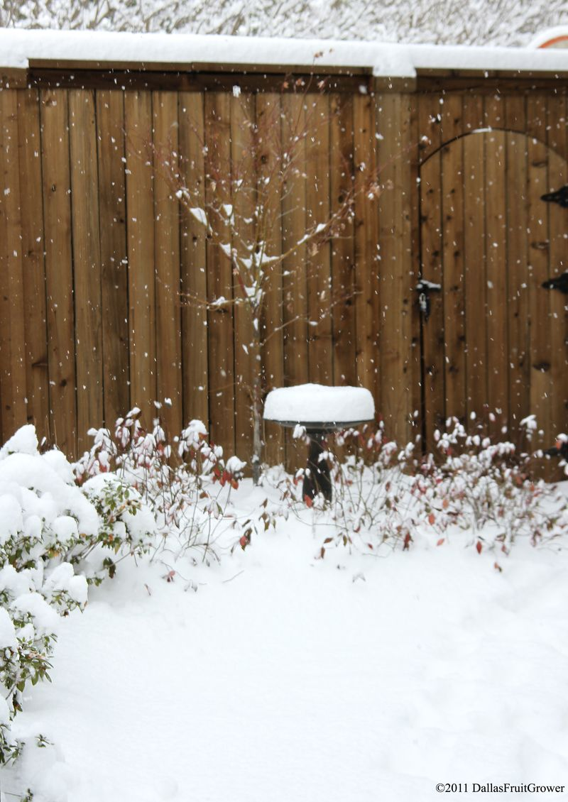 Snow with gate