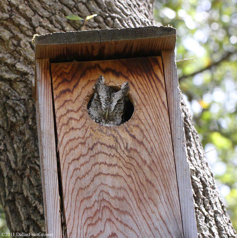 Owl baby 2011 - 2