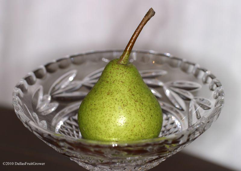 Ripe Warren pear