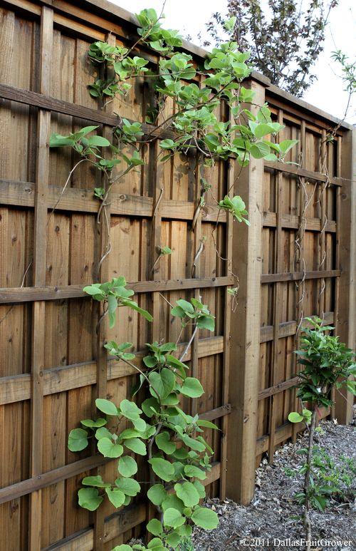 Kiwi on fence