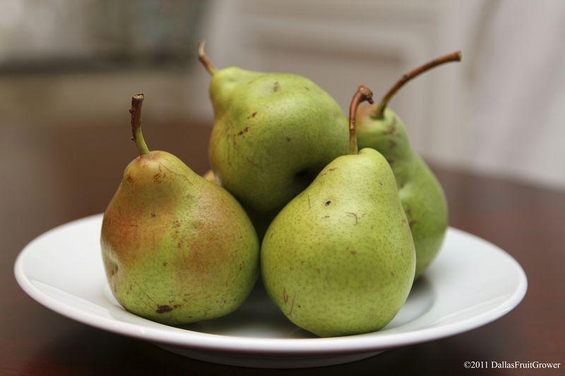 Pears - plate of ripe pears