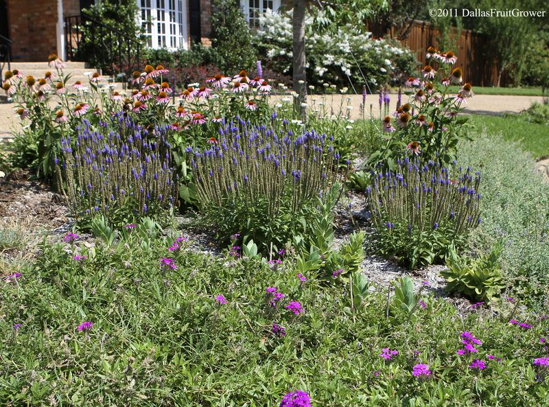 Perennial bed in front 1
