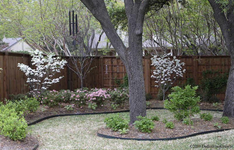 Dogwoods & azaleas