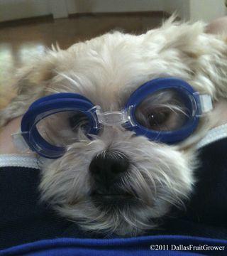 Puppy copy