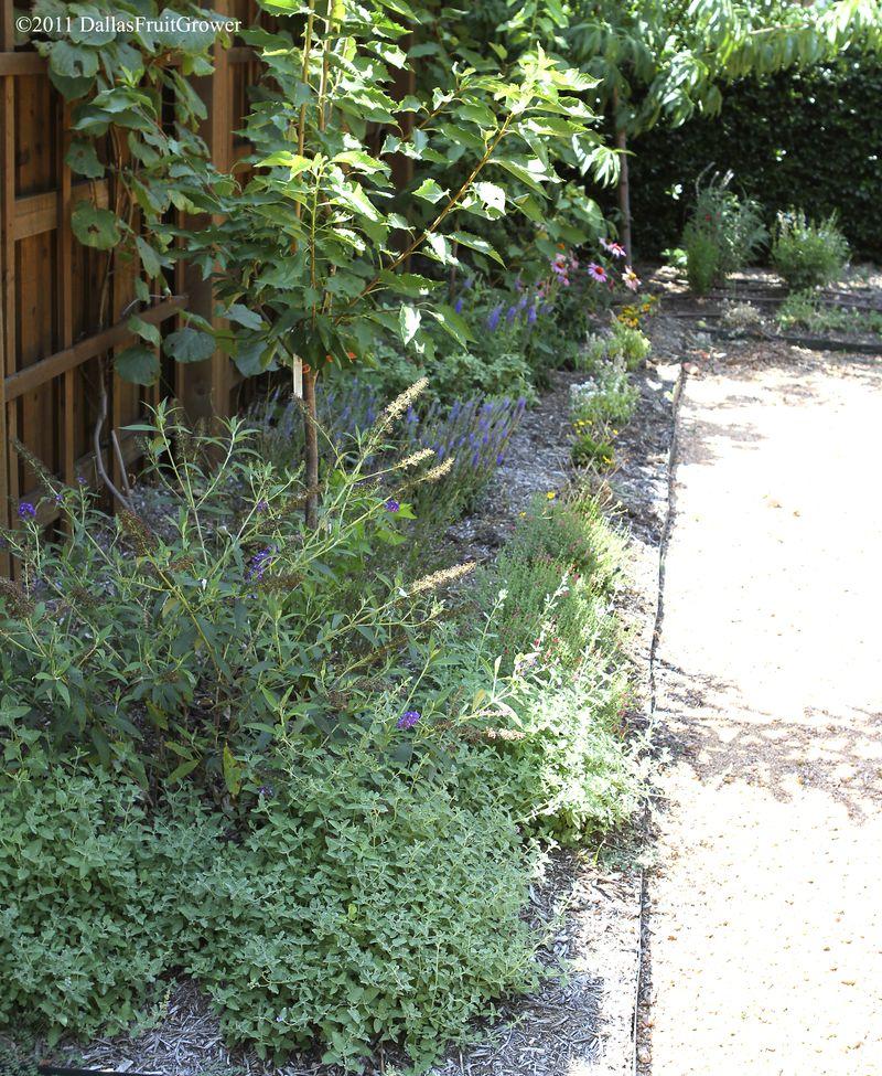 Perennial bed north of garden