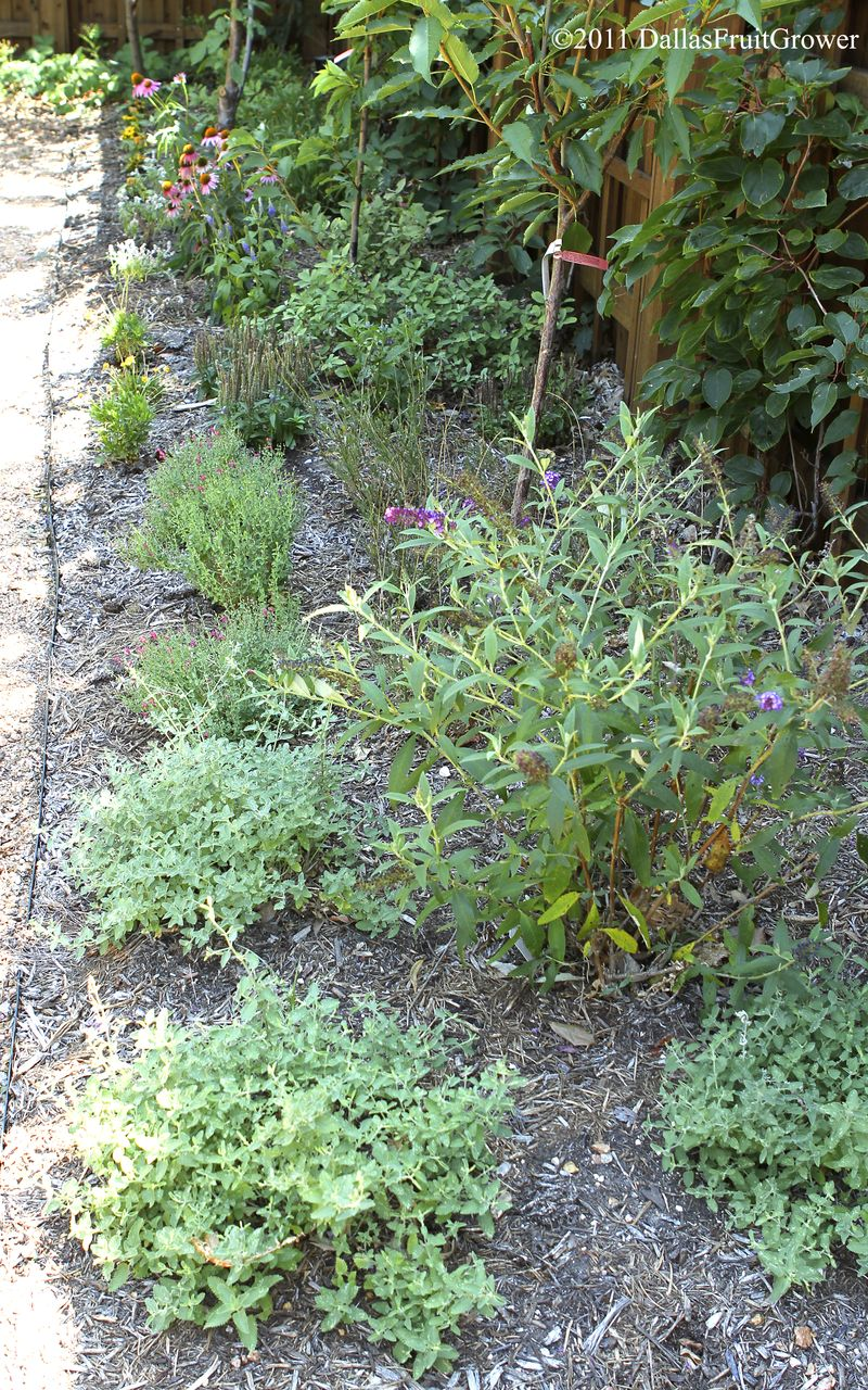 Perennial bed south of garden