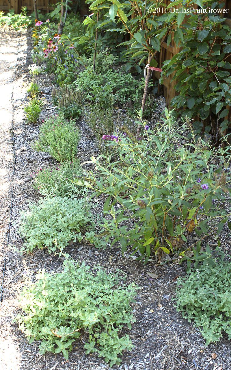 Perennial bed south of garden