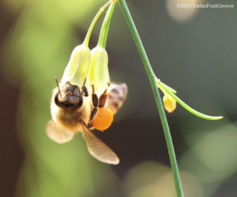 Bee - orange sack with sun in profile