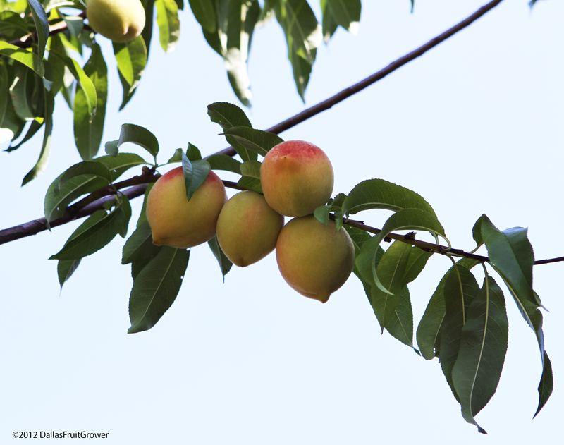 Peaches - 2012