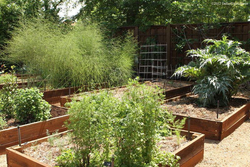 Garden - asparagus - artichokes