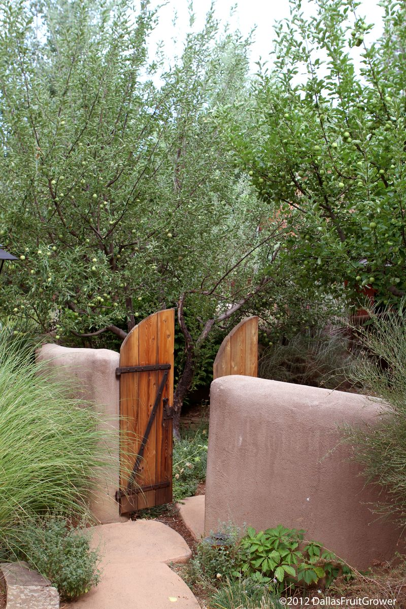 Taos apples in gate